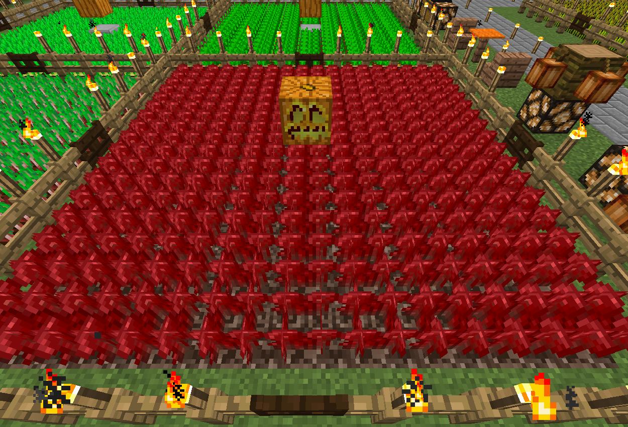 畑ができました